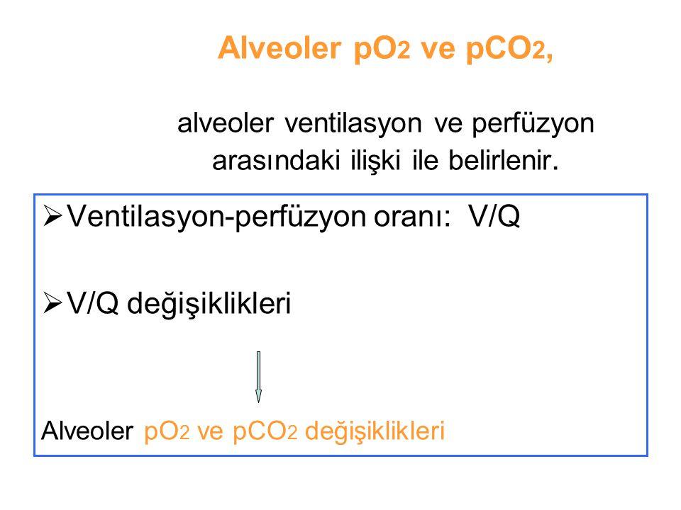 Alveoler pO 2 ve pCO 2, alveoler ventilasyon ve perfüzyon arasındaki ilişki ile belirlenir.  Ventilasyon-perfüzyon oranı: V/Q  V/Q değişiklikleri Al