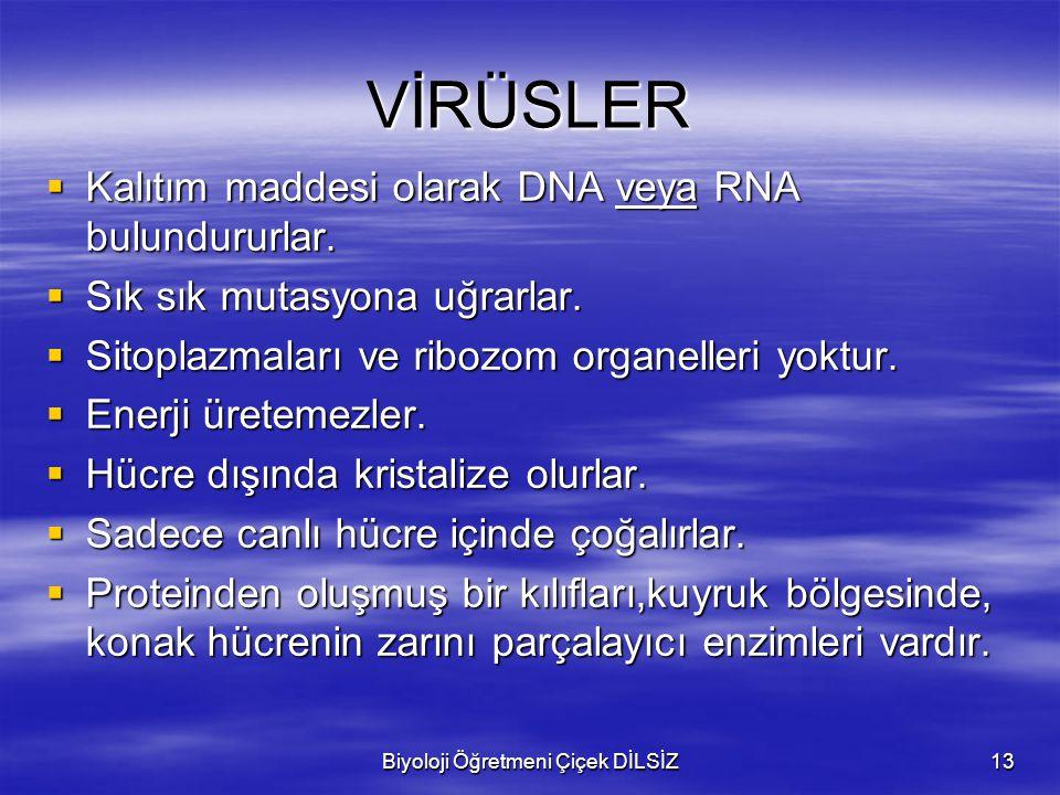 Biyoloji Öğretmeni Çiçek DİLSİZ13 VİRÜSLER  Kalıtım maddesi olarak DNA veya RNA bulundururlar.  Sık sık mutasyona uğrarlar.  Sitoplazmaları ve ribo