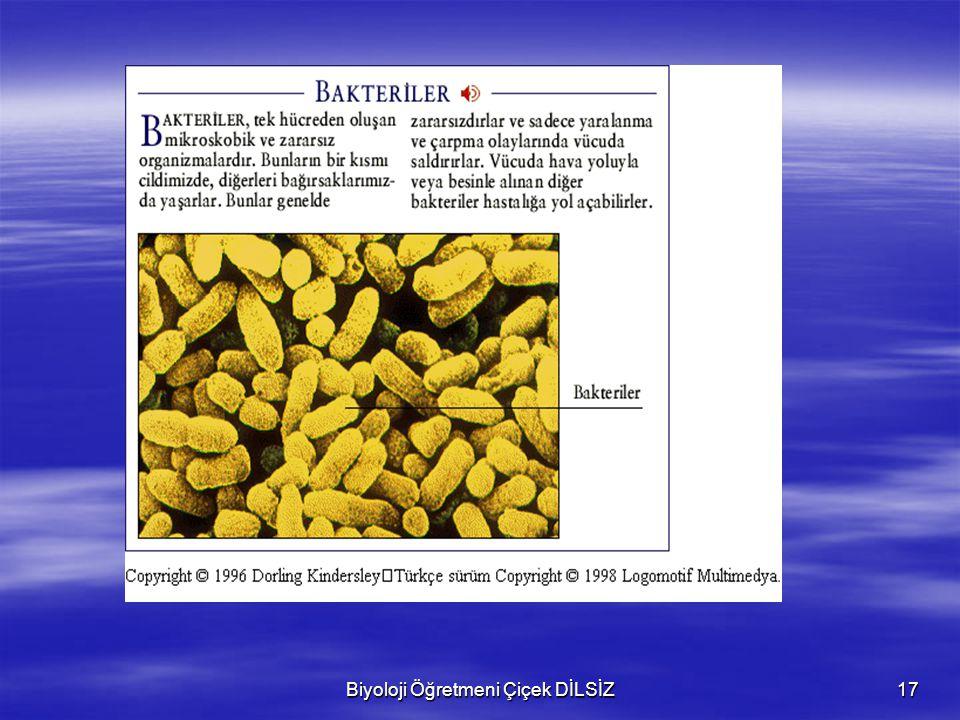 Biyoloji Öğretmeni Çiçek DİLSİZ17