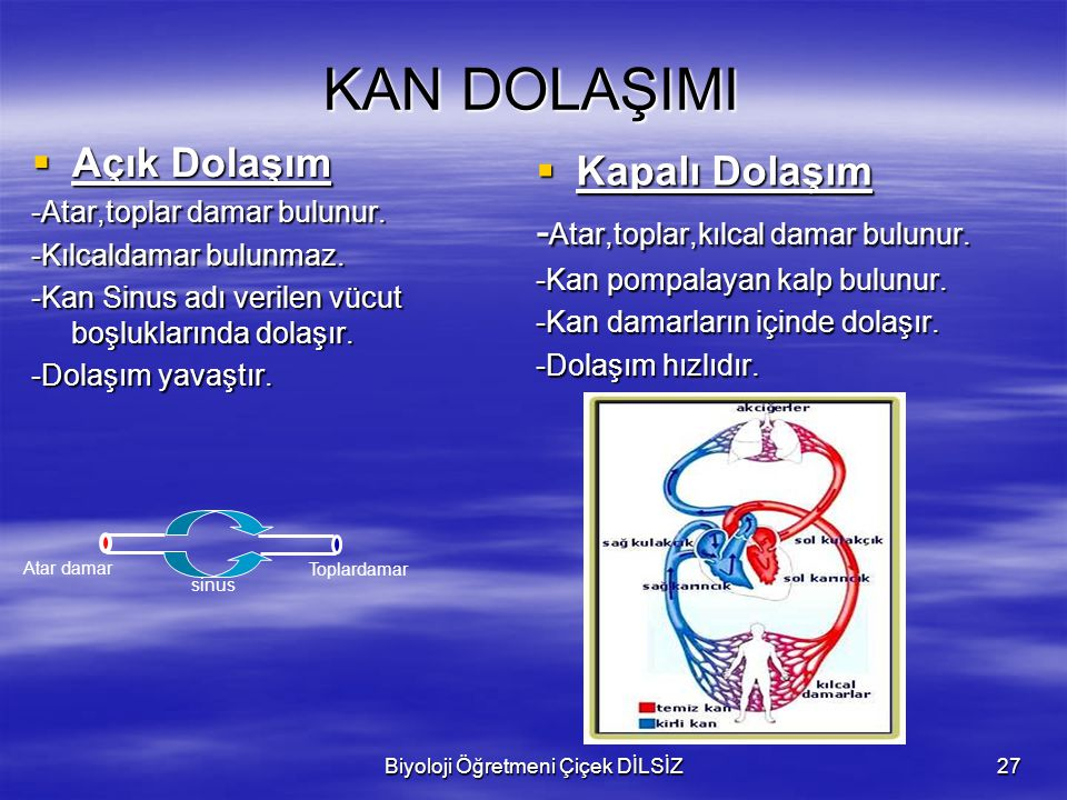 Biyoloji Öğretmeni Çiçek DİLSİZ27 KAN DOLAŞIMI  Kapalı Dolaşım - Atar,toplar,kılcal damar bulunur. -Kan pompalayan kalp bulunur. -Kan damarların için