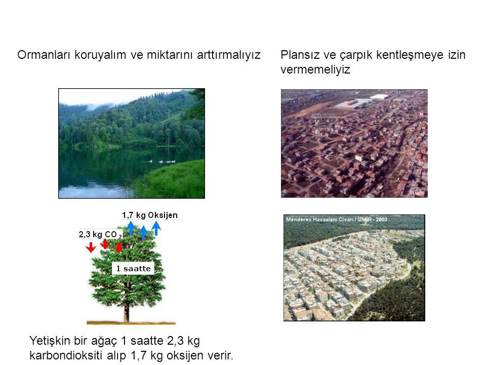 Yetişkin bir ağaç 1 saatte 2,3 kg karbondioksiti alıp 1,7 kg oksijen verir.