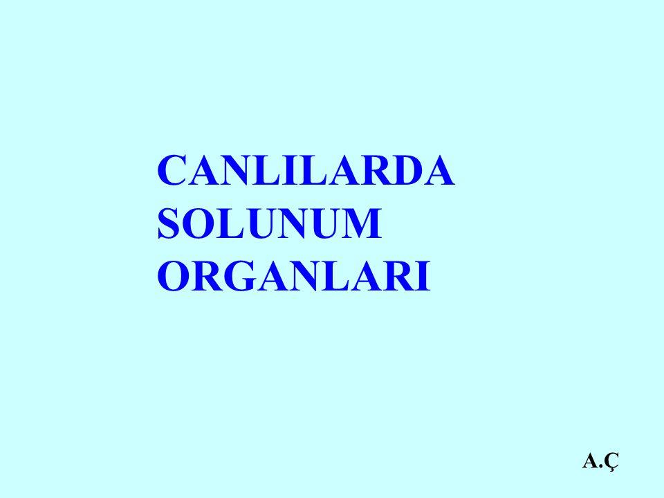 A.Ç CANLILARDA SOLUNUM ORGANLARI