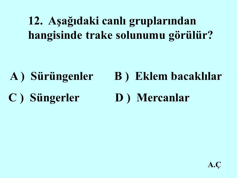 A.Ç 12.Aşağıdaki canlı gruplarından hangisinde trake solunumu görülür.
