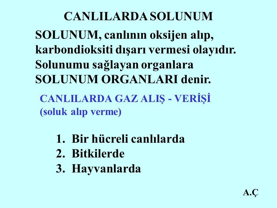 A.Ç CANLILARDA SOLUNUM SOLUNUM, canlının oksijen alıp, karbondioksiti dışarı vermesi olayıdır.