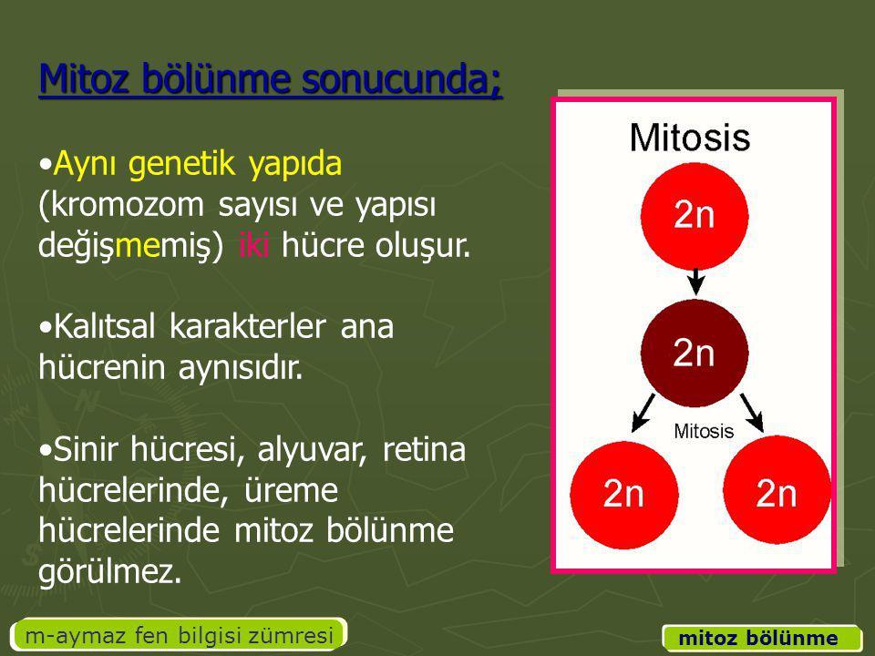 m-aymaz fen bilgisi zümresi Mitoz bölünme sonucunda; Aynı genetik yapıda (kromozom sayısı ve yapısı değişmemiş) iki hücre oluşur. Kalıtsal karakterler