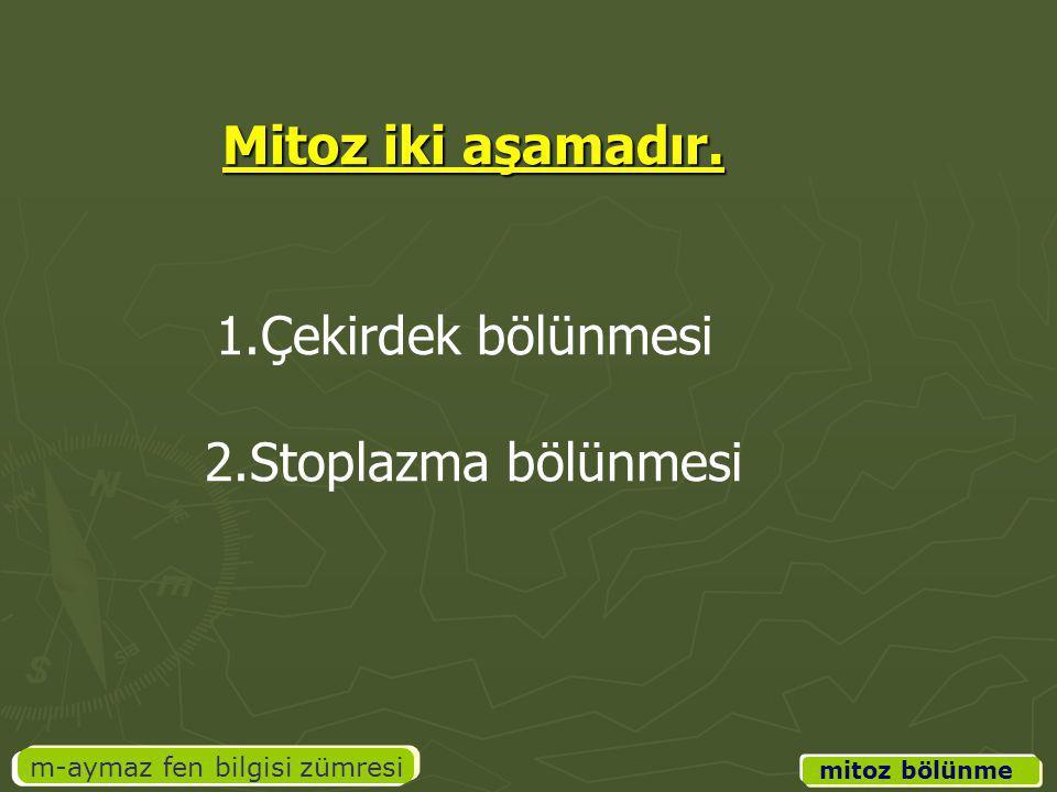 m-aymaz fen bilgisi zümresi Mitoz iki aşamadır. 1.Çekirdek bölünmesi 2.Stoplazma bölünmesi mitoz bölünme