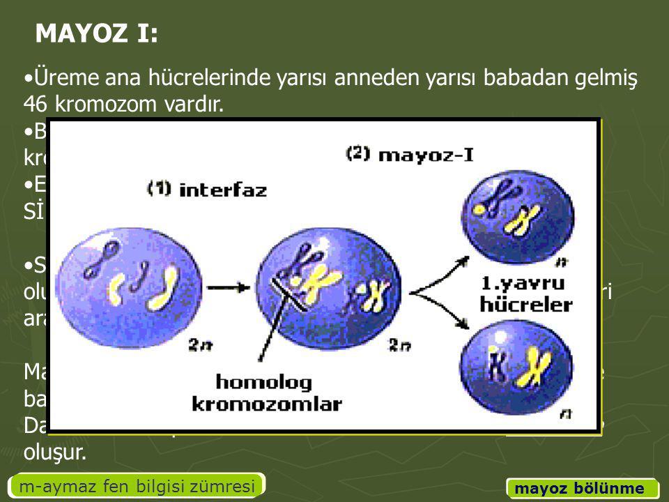 m-aymaz fen bilgisi zümresi mayoz bölünme Üreme ana hücrelerinde yarısı anneden yarısı babadan gelmiş 46 kromozom vardır. Bu kromozomlarda aynı karakt