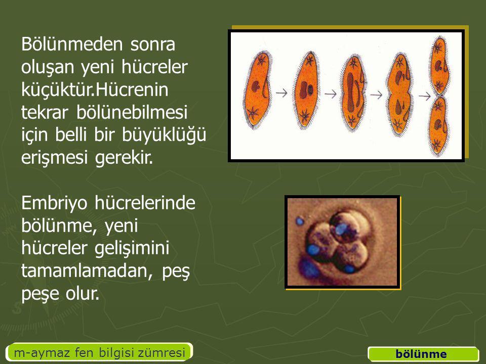 m-aymaz fen bilgisi zümresi Canlının büyüyüp gelişme, hücre sayısını arttırma ihtiyacı Yaralanan veya zarar gören doku ve yapıların onarılması Eşeyli üreyen canlılarda üreme hücrelerinin oluşumu Bölünme ile üreyen canlılarda çoğalma Hücrenin büyümesi sonucu artan hacim - yüzey oranına göre, sitoplazmanın besin, gaz alışverişi ve atık madde ihtiyaçlarını karşılamak için olur.