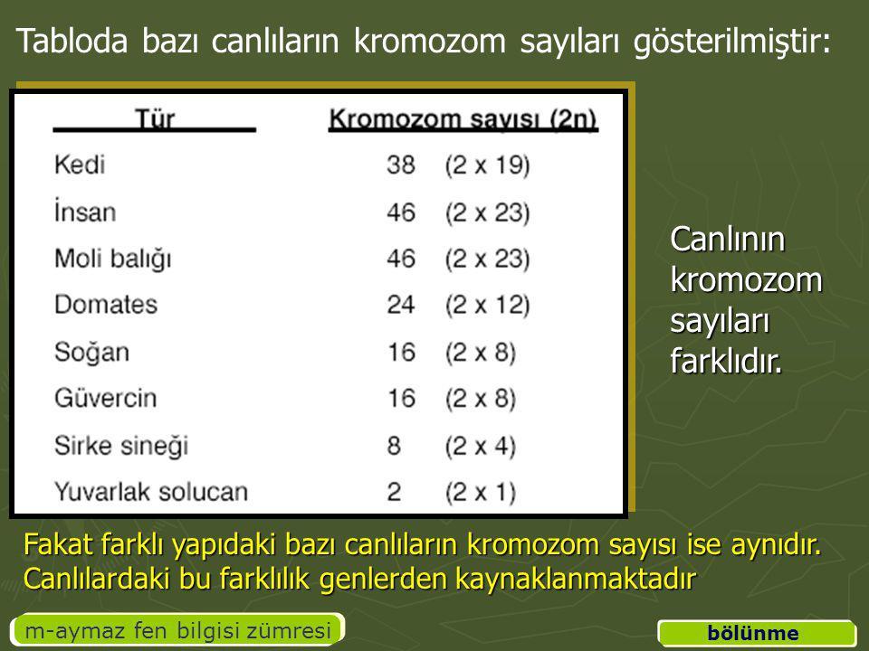 üreme m-aymaz fen bilgisi zümresi B.EŞEYLİ ÜREME 1.