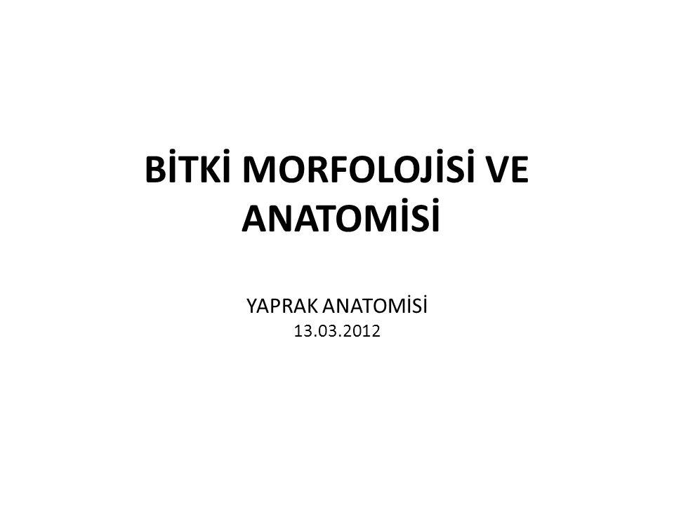 BİTKİ MORFOLOJİSİ VE ANATOMİSİ YAPRAK ANATOMİSİ 13.03.2012