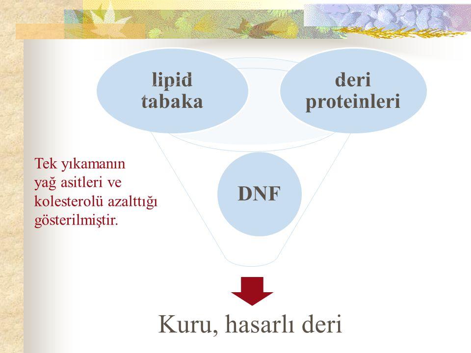 Kuru, hasarlı deri DNF deri proteinleri lipid tabaka Tek yıkamanın yağ asitleri ve kolesterolü azalttığı gösterilmiştir.
