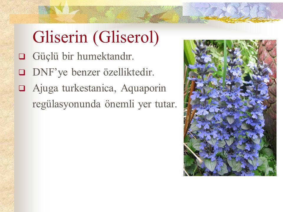 Gliserin (Gliserol)  Güçlü bir humektandır.  DNF'ye benzer özelliktedir.  Ajuga turkestanica, Aquaporin regülasyonunda önemli yer tutar.