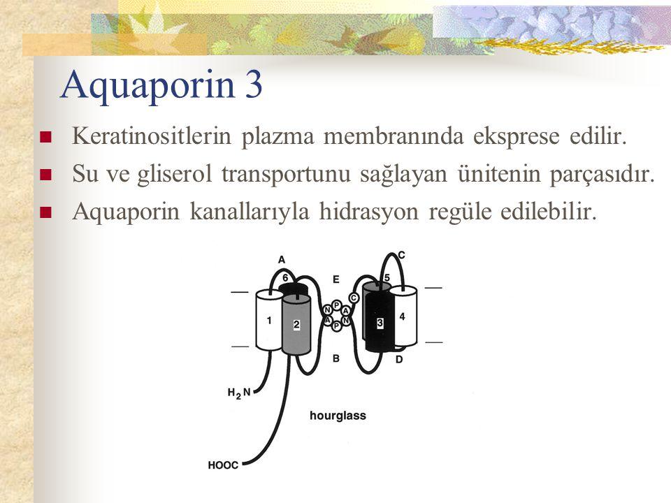 Aquaporin 3 Keratinositlerin plazma membranında eksprese edilir. Su ve gliserol transportunu sağlayan ünitenin parçasıdır. Aquaporin kanallarıyla hidr