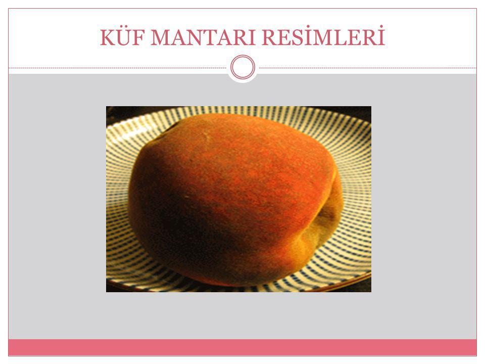 KÜF MANTARI Küf mantarı, özellikle havada bulunan sporları nemlive besinli ortamda çoğalarak meydana gelen mantar türüdür. Binlerce çok küçük mantarın