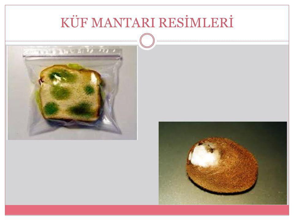 KÜF MANTARI RESİMLERİ