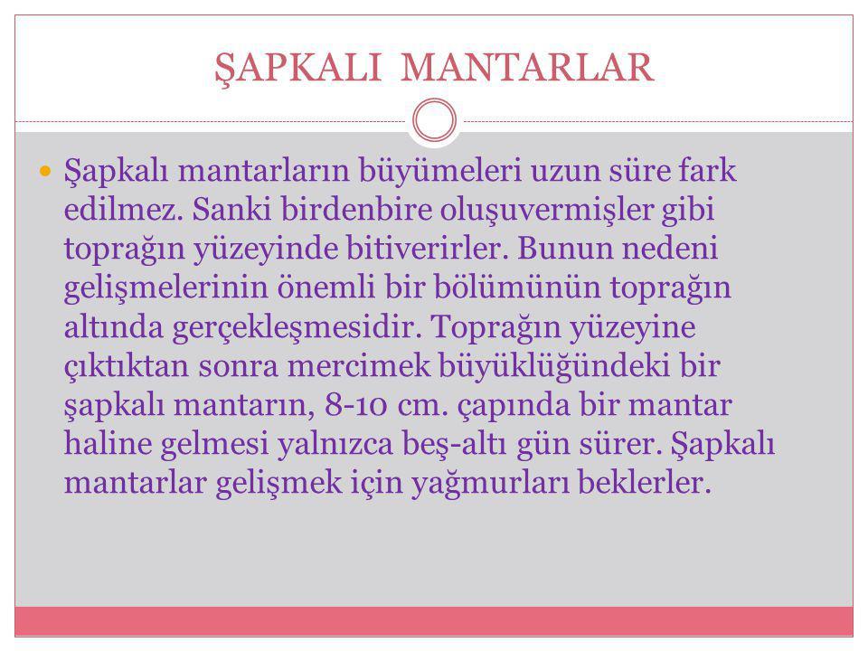 MANTAR RESİMLERİ