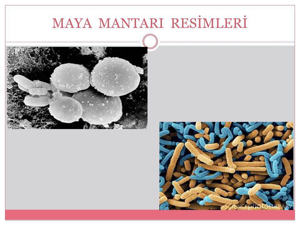 MAYA MANTARI RESİMLERİ