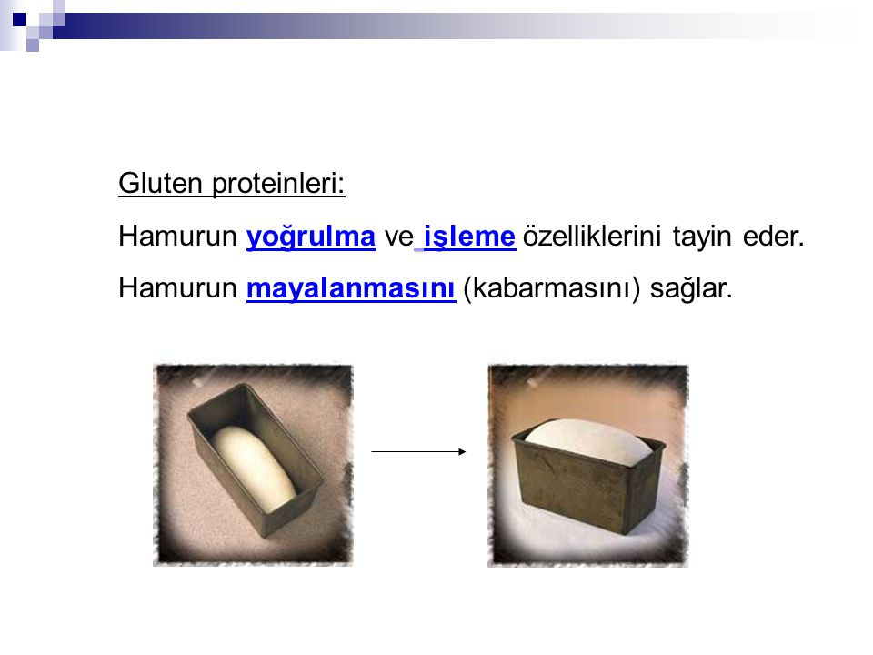 Gluten proteinleri: Hamurun yoğrulma ve işleme özelliklerini tayin eder. Hamurun mayalanmasını (kabarmasını) sağlar.