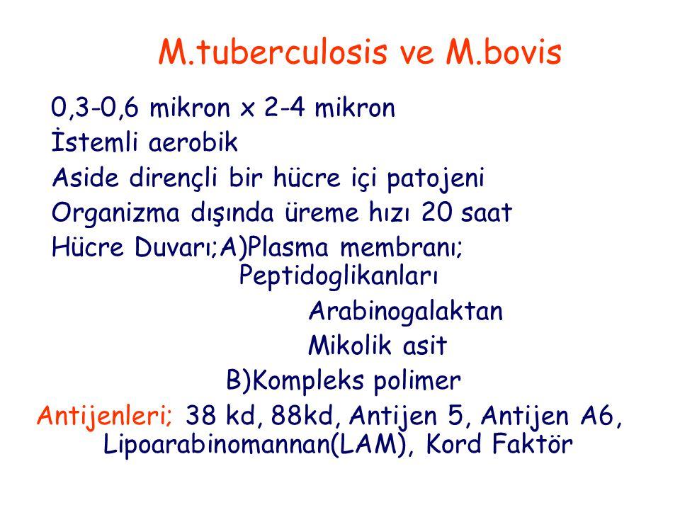 Tedavi Asemptomatik enfeksiyon Positif deri testi INH 6-9 ay Hastalık yok Akciğer tüberkülozu INH+RIF 9-12 ay veya INH+RIF+SM veya INH+RIF+PZA veya INH+RIF+ETB (gözlem altında) INH+RIF 2 ay günlük + 7 ay haftada 2 gün Hilar adenopati Akciğer gibi Akciğer dışı tüberküloz Akciğer gibi (Miliyer, menenjit, kemik/eklem dışındakiler) Miliyer, menenjit, INH+RIF+PZA+SM 2 ay günlük+ kemik/eklem infeksiyonu + INH+RIF 10 ay günlük +veya INH+RIF 10 ay haftada 2 gün