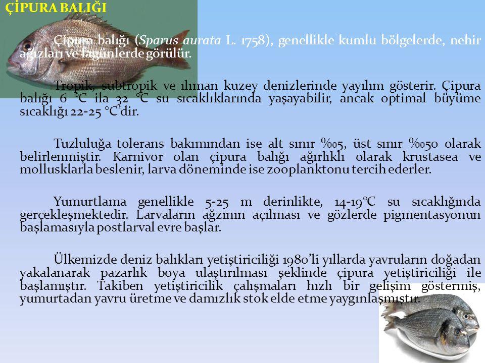 ÇİPURA BALIĞI Çipura balığı (Sparus aurata L.