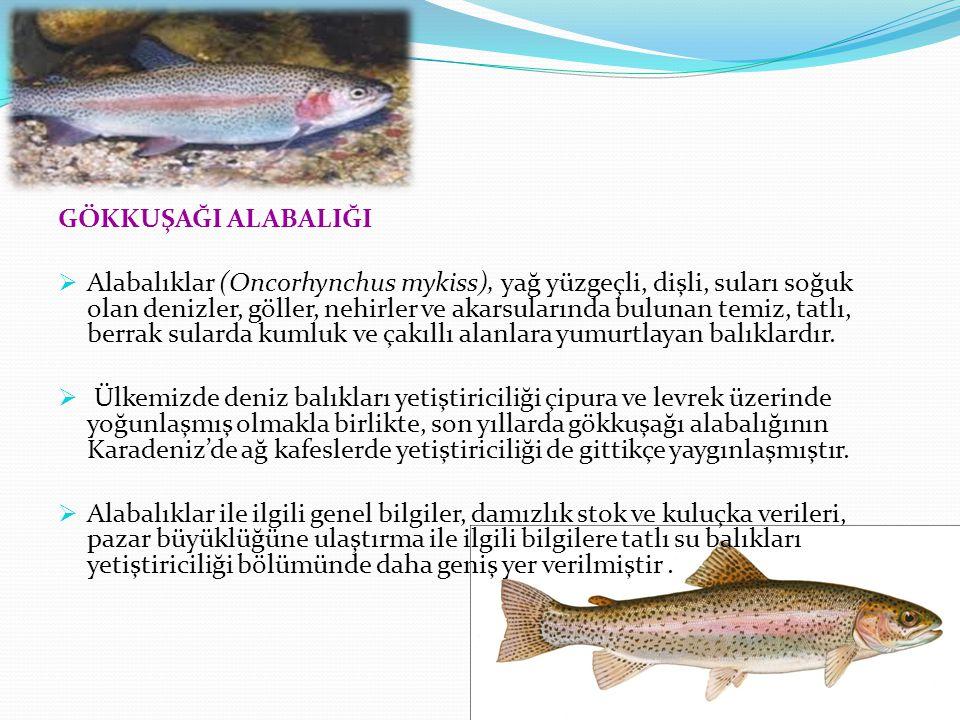 GÖKKUŞAĞI ALABALIĞI  Alabalıklar (Oncorhynchus mykiss), yağ yüzgeçli, dişli, suları soğuk olan denizler, göller, nehirler ve akarsularında bulunan temiz, tatlı, berrak sularda kumluk ve çakıllı alanlara yumurtlayan balıklardır.