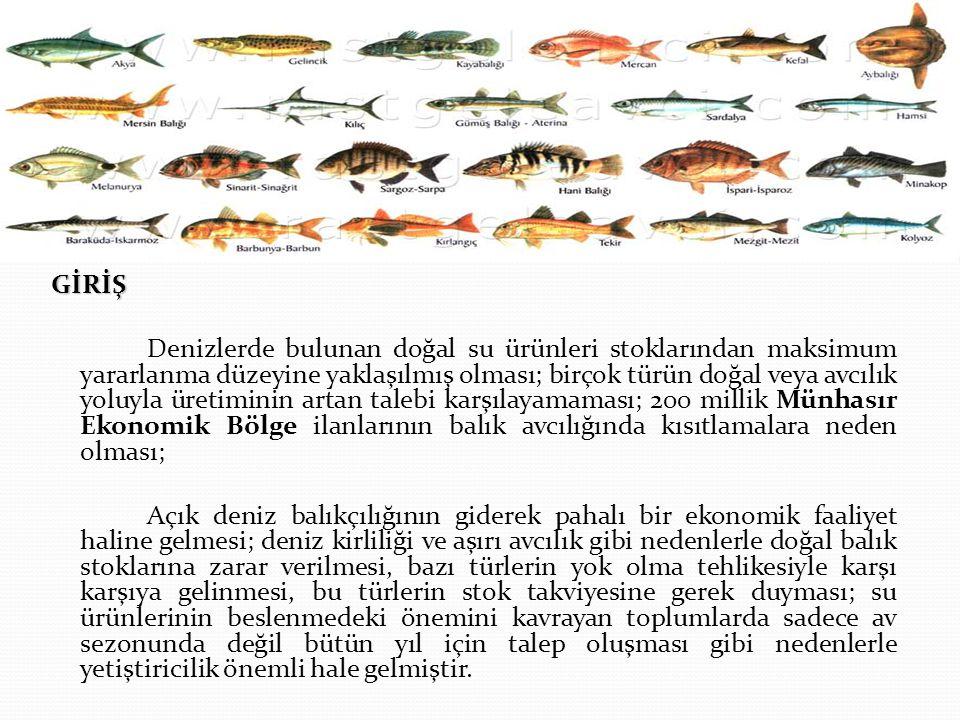 GİRİŞ Denizlerde bulunan doğal su ürünleri stoklarından maksimum yararlanma düzeyine yaklaşılmış olması; birçok türün doğal veya avcılık yoluyla üretiminin artan talebi karşılayamaması; 200 millik Münhasır Ekonomik Bölge ilanlarının balık avcılığında kısıtlamalara neden olması; Açık deniz balıkçılığının giderek pahalı bir ekonomik faaliyet haline gelmesi; deniz kirliliği ve aşırı avcılık gibi nedenlerle doğal balık stoklarına zarar verilmesi, bazı türlerin yok olma tehlikesiyle karşı karşıya gelinmesi, bu türlerin stok takviyesine gerek duyması; su ürünlerinin beslenmedeki önemini kavrayan toplumlarda sadece av sezonunda değil bütün yıl için talep oluşması gibi nedenlerle yetiştiricilik önemli hale gelmiştir.
