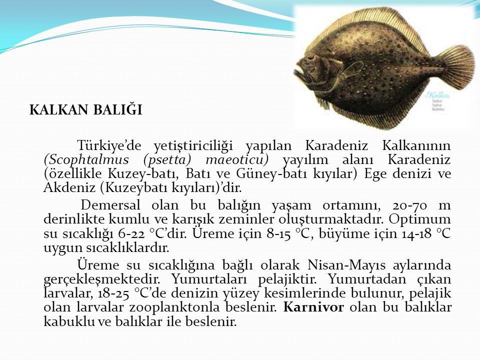 KALKAN BALIĞI Türkiye'de yetiştiriciliği yapılan Karadeniz Kalkanının (Scophtalmus (psetta) maeoticu) yayılım alanı Karadeniz (özellikle Kuzey-batı, Batı ve Güney-batı kıyılar) Ege denizi ve Akdeniz (Kuzeybatı kıyıları)'dir.