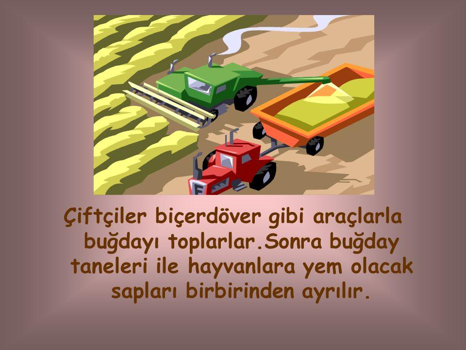 Çiftçiler biçerdöver gibi araçlarla buğdayı toplarlar.Sonra buğday taneleri ile hayvanlara yem olacak sapları birbirinden ayrılır.