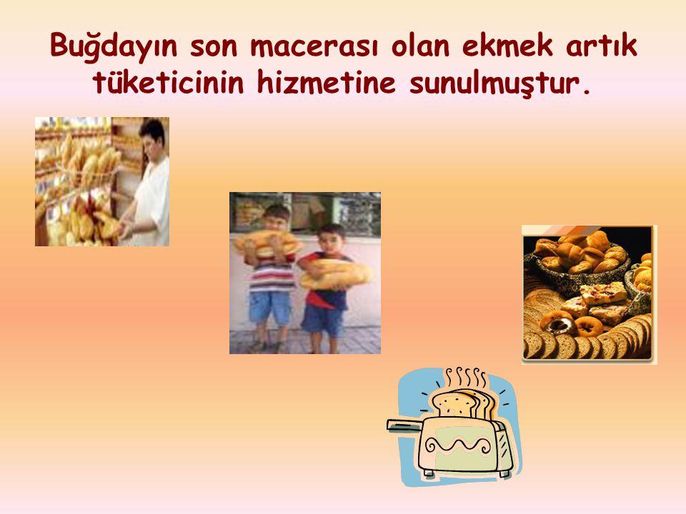 Buğdayın son macerası olan ekmek artık tüketicinin hizmetine sunulmuştur.
