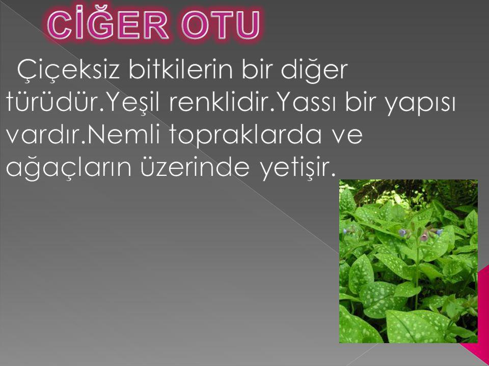  Çanak yaprak: Çiçeğin yeşil renkli bölümüdür.Çiçeği dışarıdan çevreler.Çiçeğin özellikle tomurcuk durumunda iken korunmasını sağlar.