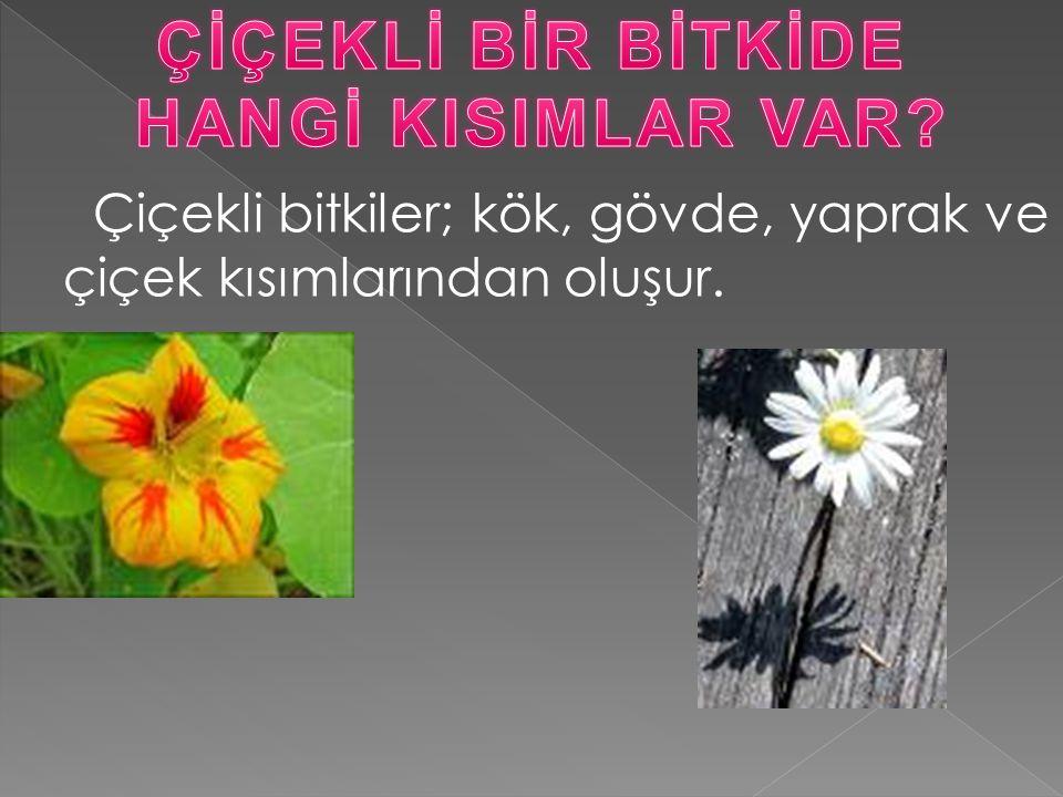 Çiçekli bitkiler; kök, gövde, yaprak ve çiçek kısımlarından oluşur.