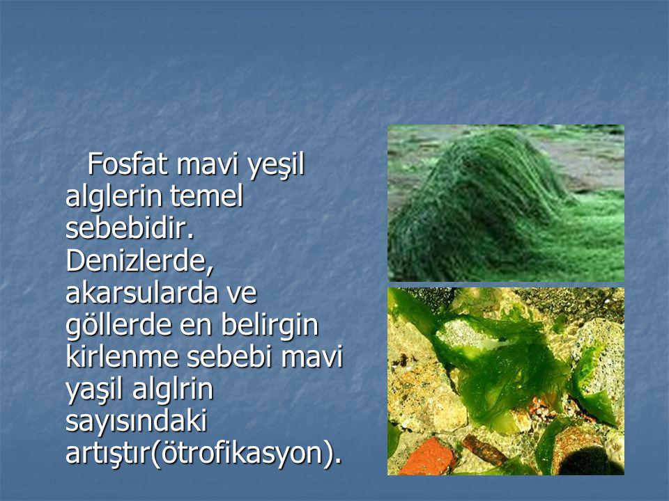 Fosfat mavi yeşil alglerin temel sebebidir. Denizlerde, akarsularda ve göllerde en belirgin kirlenme sebebi mavi yaşil alglrin sayısındaki artıştır(öt