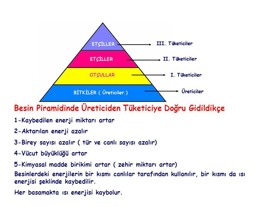 Besin Piramidinde Üreticiden Tüketiciye Doğru Gidildikçe 1-Kaybedilen enerji miktarı artar 2-Aktarılan enerji azalır 3-Birey sayısı azalır ( tür ve ca