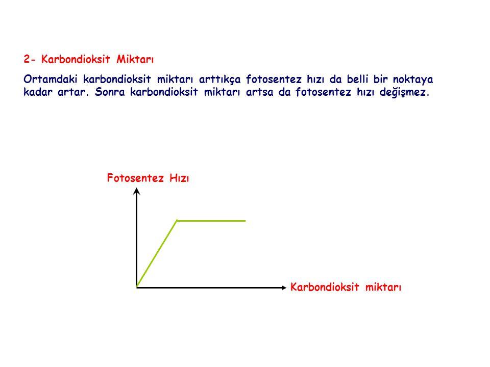 FOTOSENTEZ 2- Karbondioksit Miktarı Ortamdaki karbondioksit miktarı arttıkça fotosentez hızı da belli bir noktaya kadar artar. Sonra karbondioksit mik