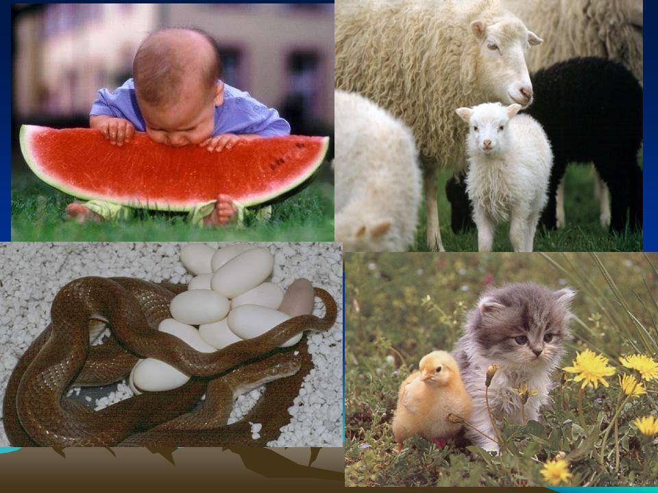 7.ÜREME Her canlı neslini yani soyunu devam ettirmek için üreme yapar… Üreme tek ve çok hücreli canlılarda farklı şekillerde gerçekleşir…