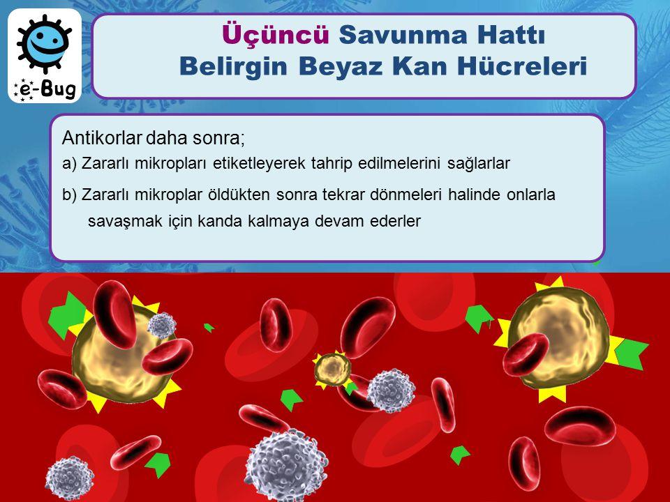 Üçüncü Savunma Hattı Belirgin Beyaz Kan Hücreleri Antikorlar daha sonra; a) Zararlı mikropları etiketleyerek tahrip edilmelerini sağlarlar b) Zararlı