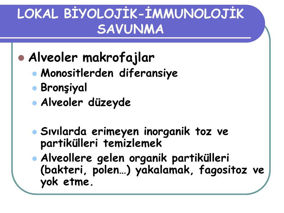 LOKAL BİYOLOJİK-İMMUNOLOJİK SAVUNMA Alveoler makrofajlar Monositlerden diferansiye Bronşiyal Alveoler düzeyde Sıvılarda erimeyen inorganik toz ve part
