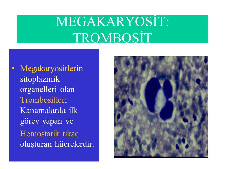 MEGAKARYOSİT: TROMBOSİT Megakaryositlerin sitoplazmik organelleri olan Trombositler; Kanamalarda ilk görev yapan ve Hemostatik tıkaç oluşturan hücrelerdir.