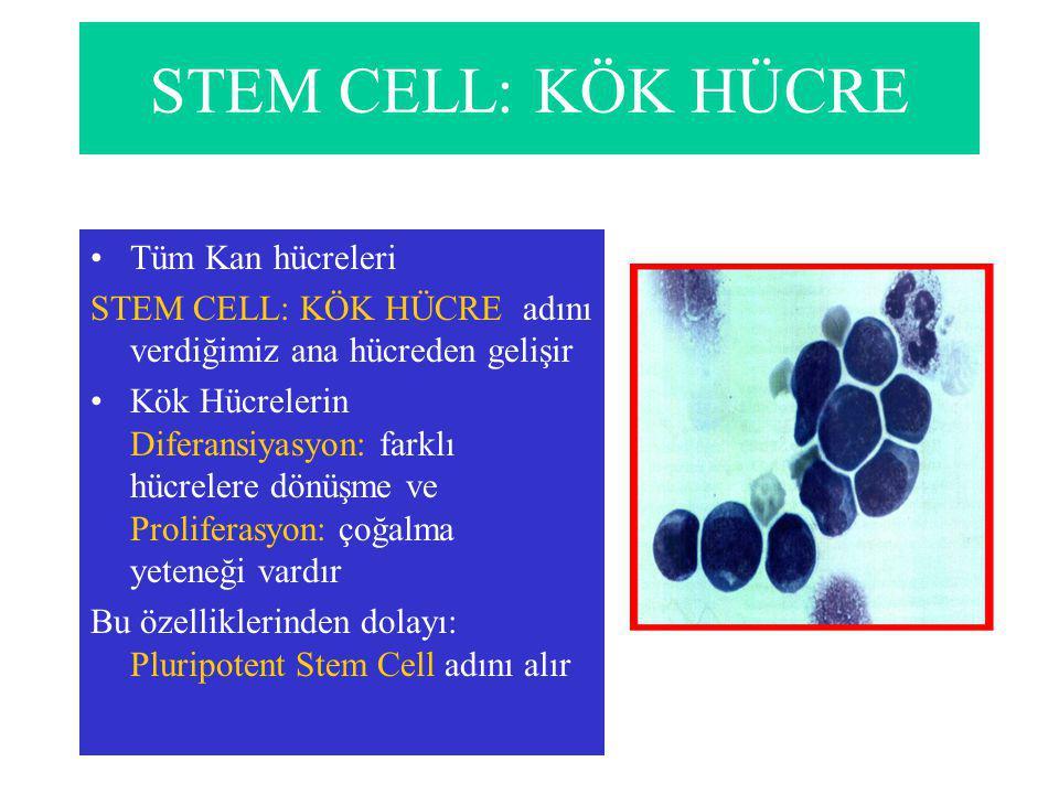 STEM CELL: KÖK HÜCRE Tüm Kan hücreleri STEM CELL: KÖK HÜCRE adını verdiğimiz ana hücreden gelişir Kök Hücrelerin Diferansiyasyon: farklı hücrelere dönüşme ve Proliferasyon: çoğalma yeteneği vardır Bu özelliklerinden dolayı: Pluripotent Stem Cell adını alır