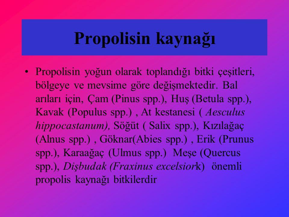 Propolisin kaynağı Propolisin yoğun olarak toplandığı bitki çeşitleri, bölgeye ve mevsime göre değişmektedir. Bal arıları için, Çam (Pinus spp.), Huş
