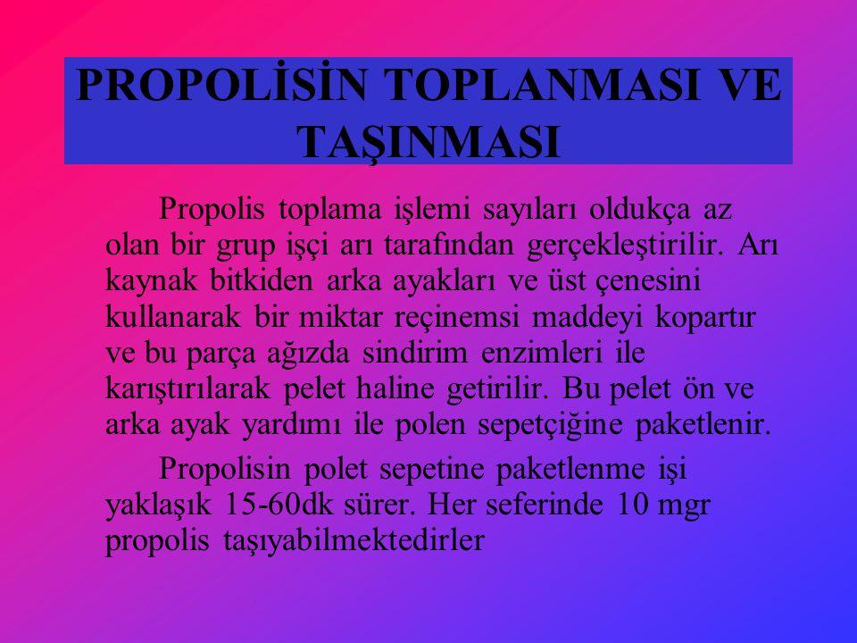 PROPOLİSİN TOPLANMASI VE TAŞINMASI Propolis toplama işlemi sayıları oldukça az olan bir grup işçi arı tarafından gerçekleştirilir. Arı kaynak bitkiden