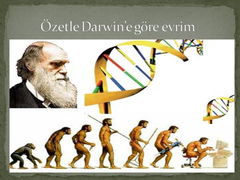 Evrim olayının nasıl olabileceği hakkında belli bir mekanizma öneren ilk biyolog JEAN BAPTİST LAMARCK olmuştur.