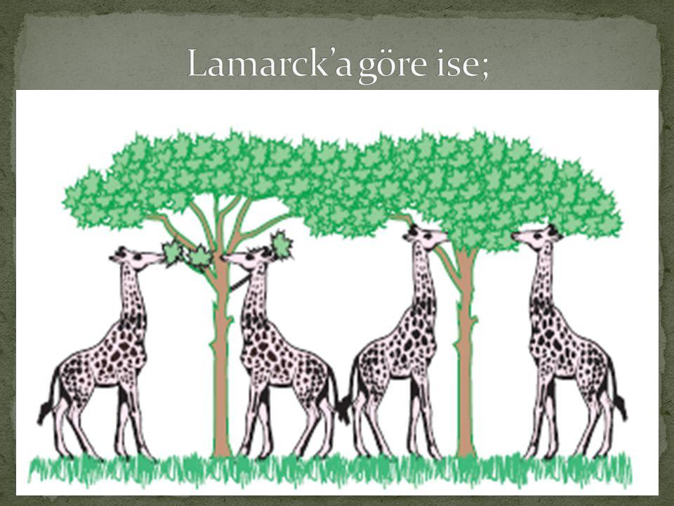 Lamarck'ın hipotezi özünde yanlış olmasına rağmen, türlerin bazı doğal olaylar sonucu değişebildiği görüşünü ortaya koyması bakımından önemli bir görüş olarak kabul görmüştür.