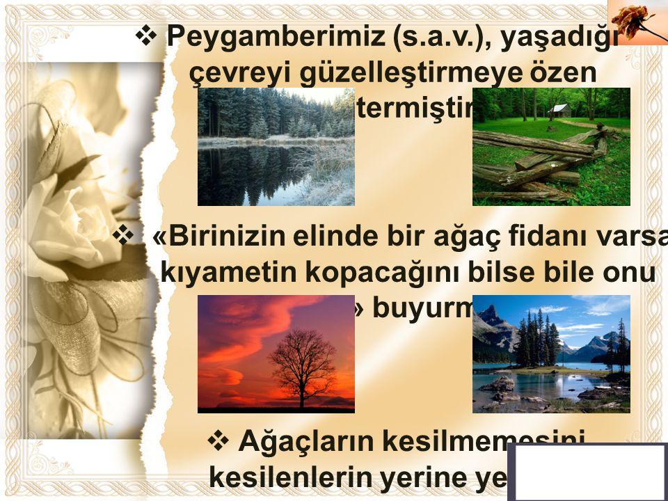 Cahide KAVAK  Peygamberimiz (s.a.v.), yaşadığı çevreyi güzelleştirmeye özen göstermiştir.  Ağaçların kesilmemesini, kesilenlerin yerine yenilerinin