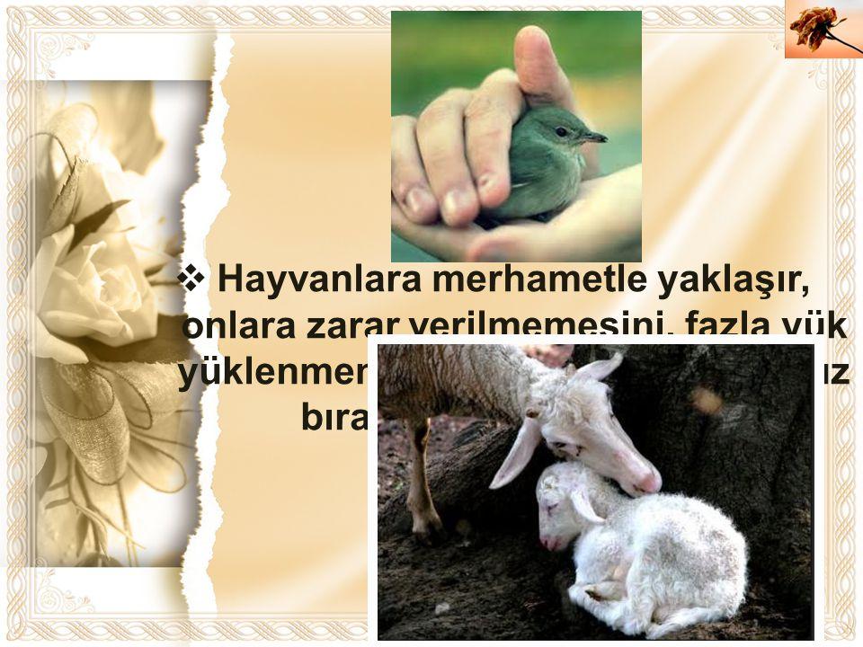 Cahide KAVAK  Hayvanlara merhametle yaklaşır, onlara zarar verilmemesini, fazla yük yüklenmemesini, onların aç ve susuz bırakılmamasını isterdi.