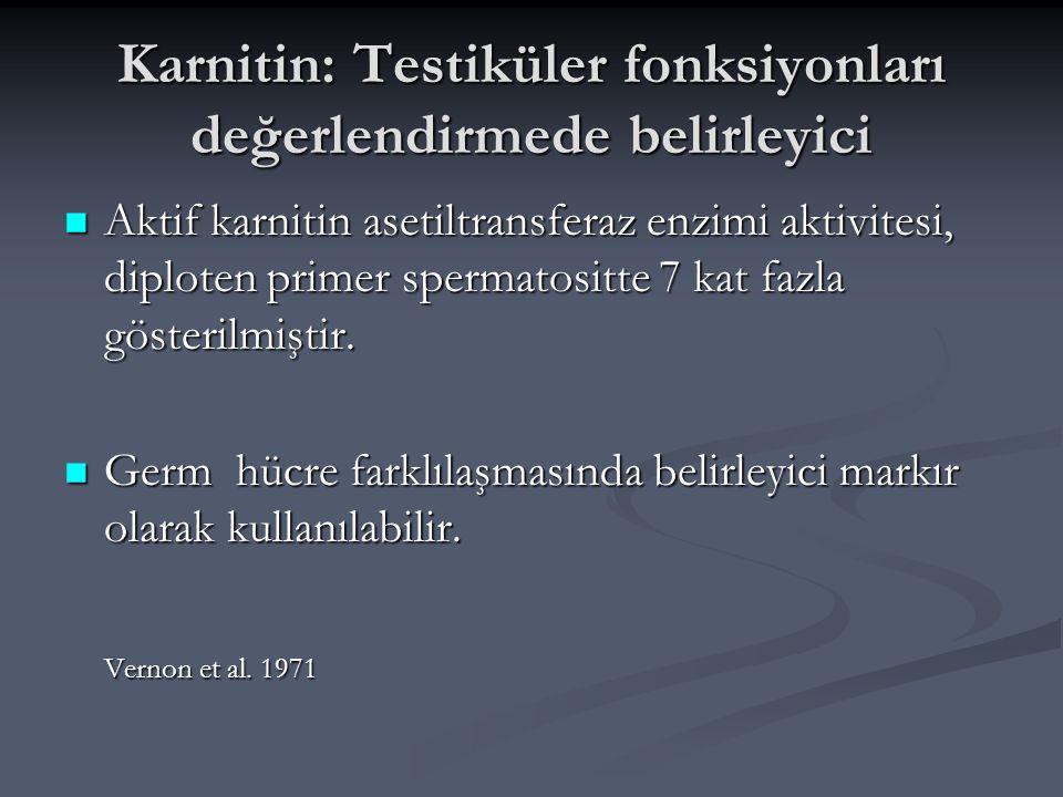 Karnitin: Testiküler fonksiyonları değerlendirmede belirleyici Aktif karnitin asetiltransferaz enzimi aktivitesi, diploten primer spermatositte 7 kat
