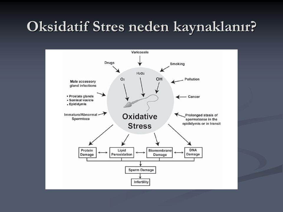 Oksidatif Stres neden kaynaklanır?