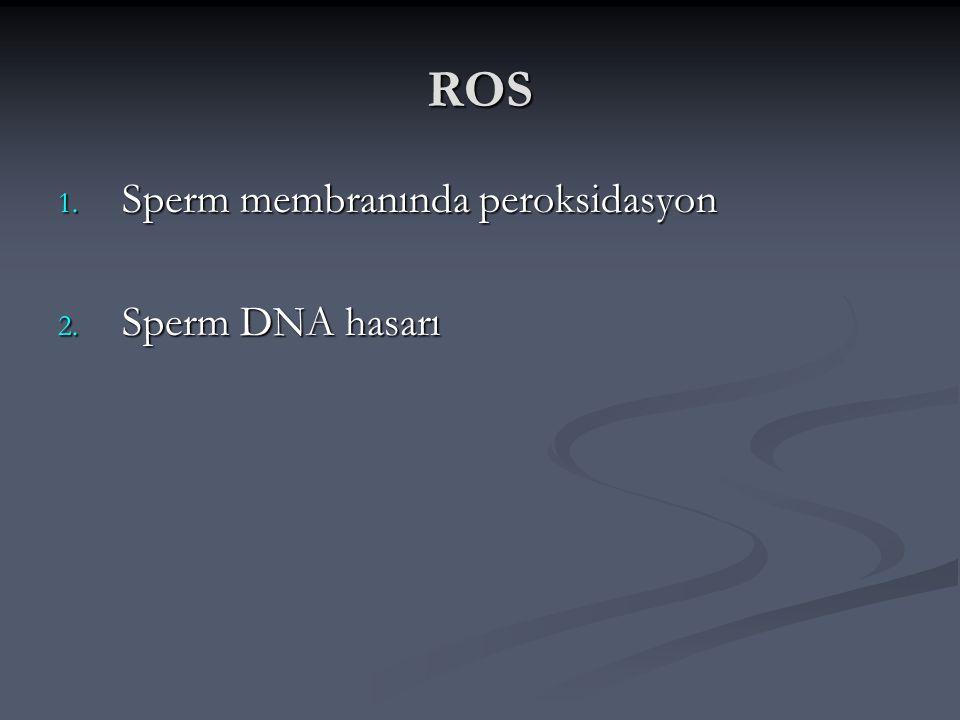 ROS 1. Sperm membranında peroksidasyon 2. Sperm DNA hasarı