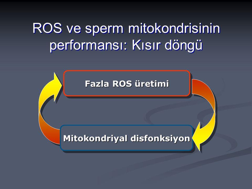 Fazla ROS üretimi Mitokondriyal disfonksiyon ROS ve sperm mitokondrisinin performansı: Kısır döngü
