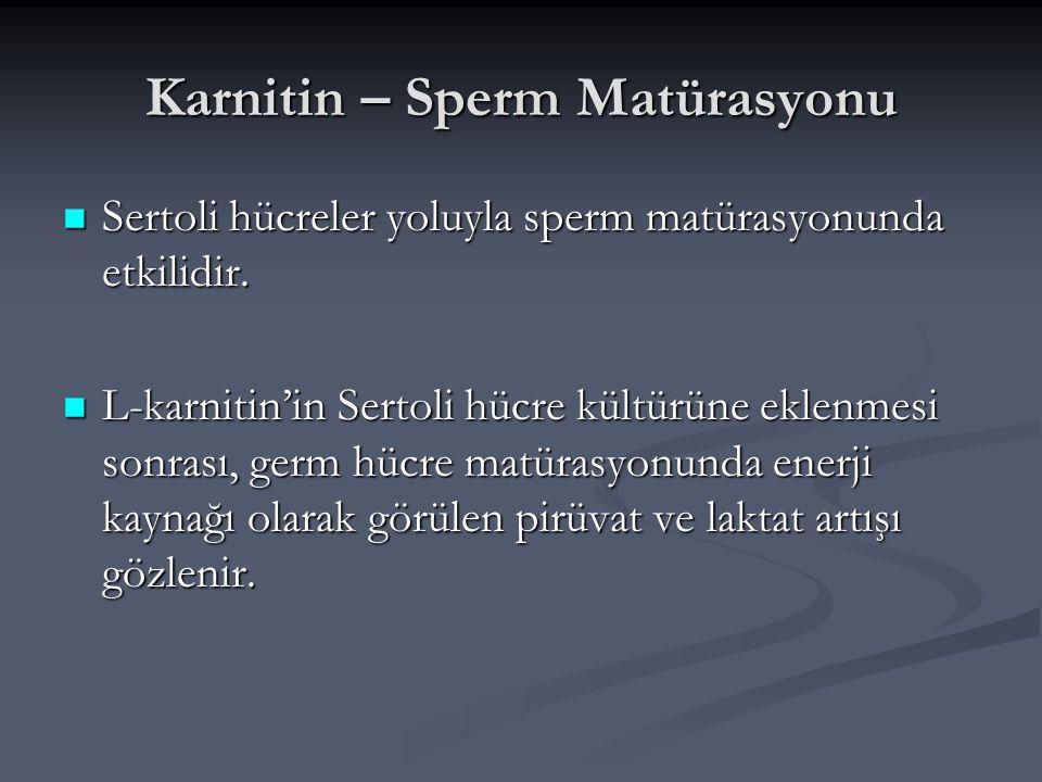 Karnitin – Sperm Matürasyonu Sertoli hücreler yoluyla sperm matürasyonunda etkilidir. Sertoli hücreler yoluyla sperm matürasyonunda etkilidir. L-karni